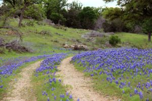 Bare Butts & Bluebonnets Wildflower Walk-Cancelled